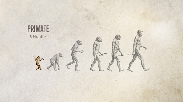 Evolution of Primate