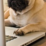 officedogs_small