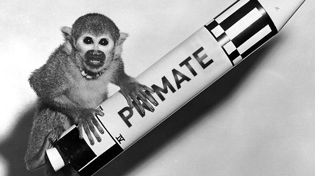 Monkey on a Primate rocket